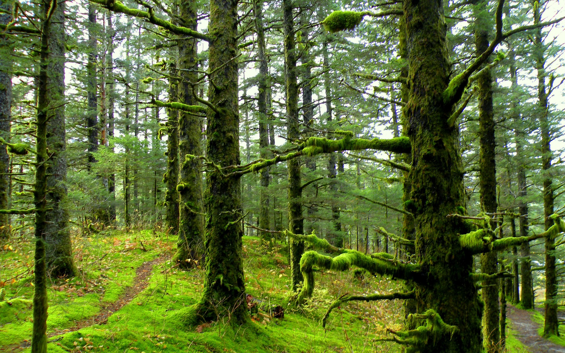 forest-mossy-pc-and-mac-1243072
